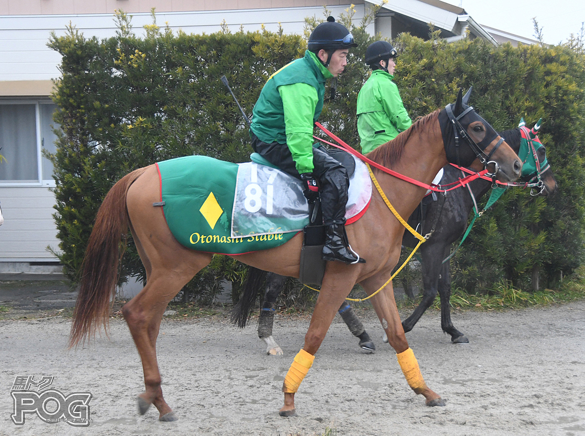 デルマカシャーサの馬体写真