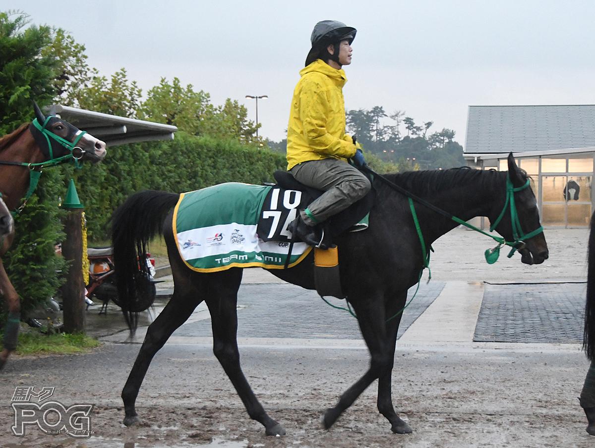 モンアムールの馬体写真