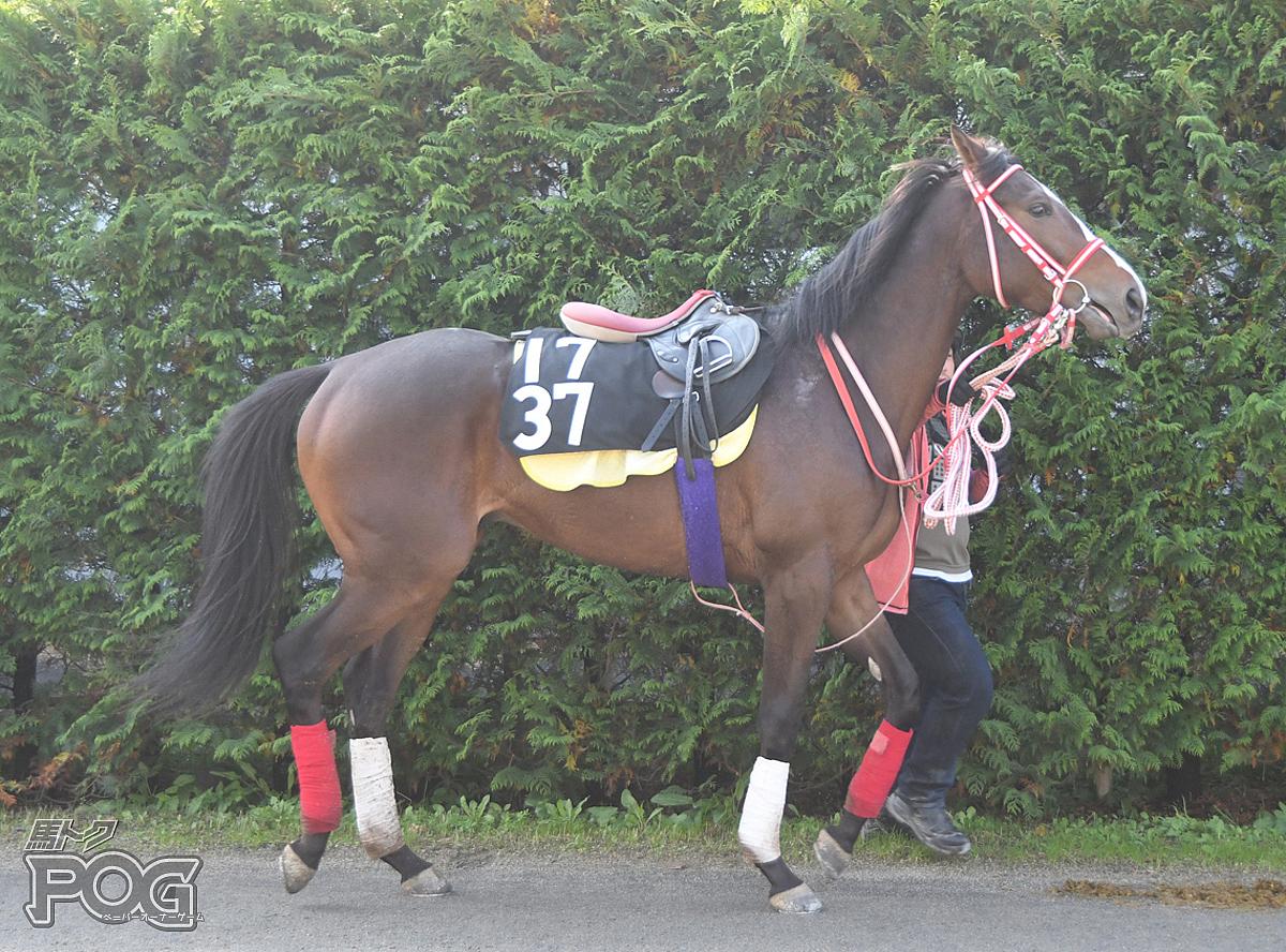 ステイフーリッシュの馬体写真