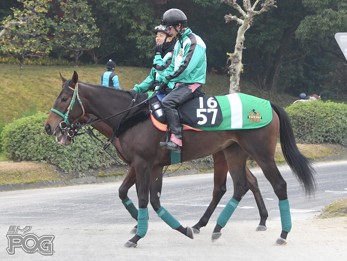 ボルティモアの馬体写真