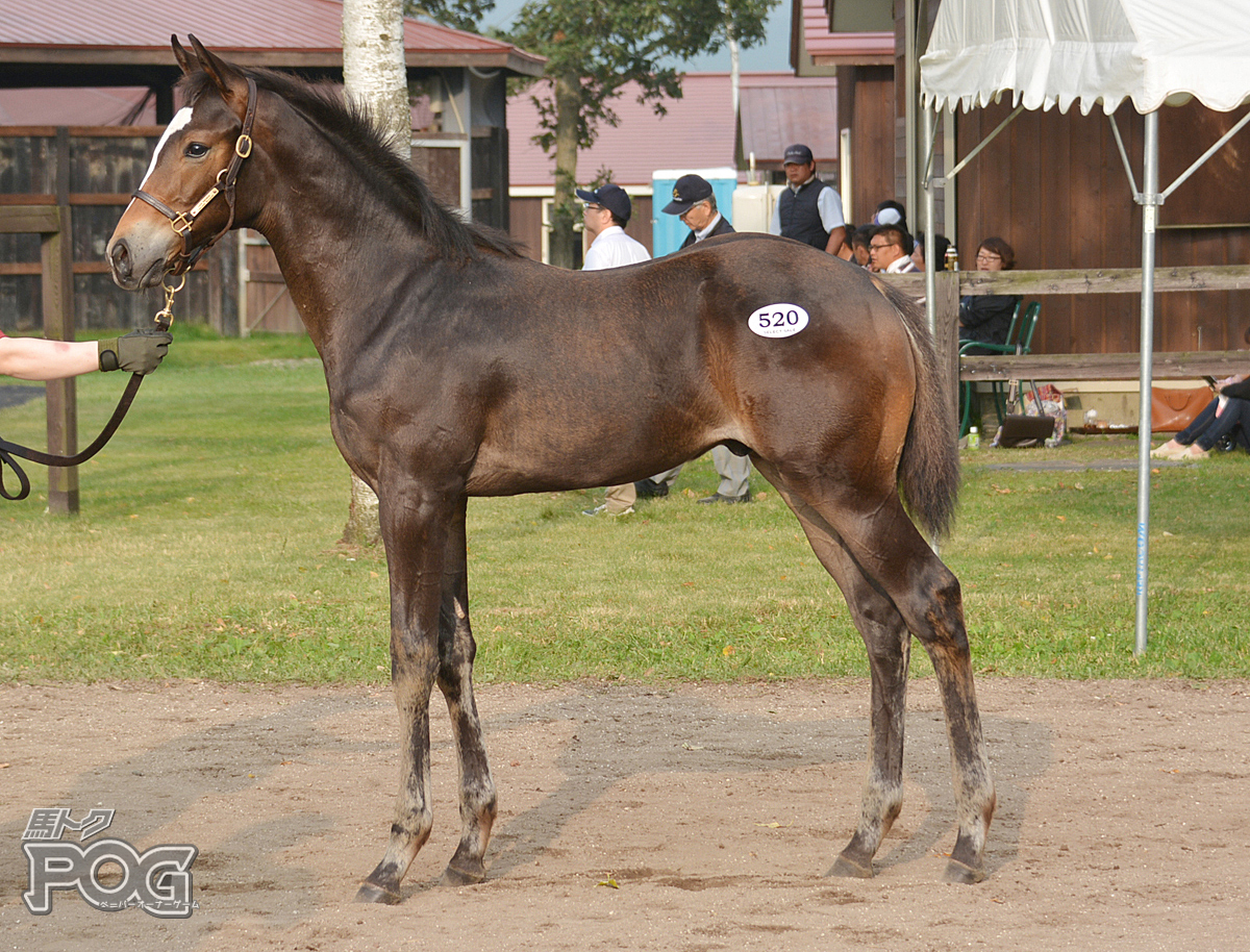 ビッグディールの馬体写真