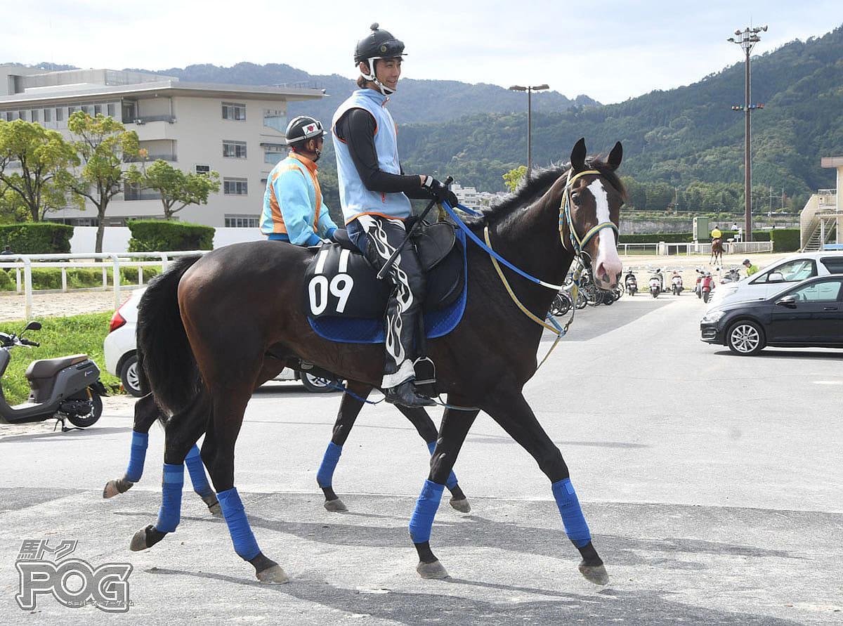 ラストクルセイドの馬体写真