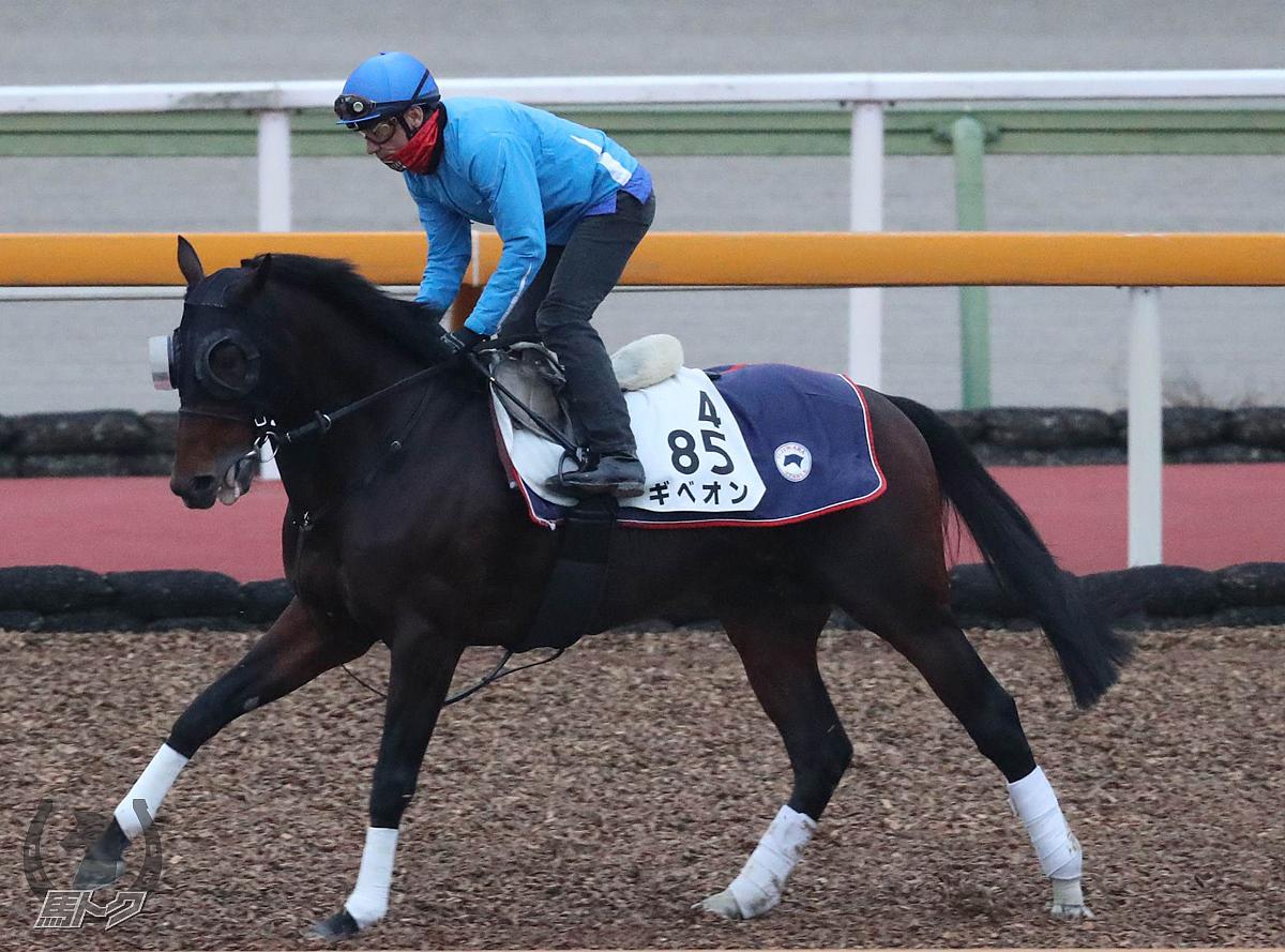 ギベオンの馬体写真