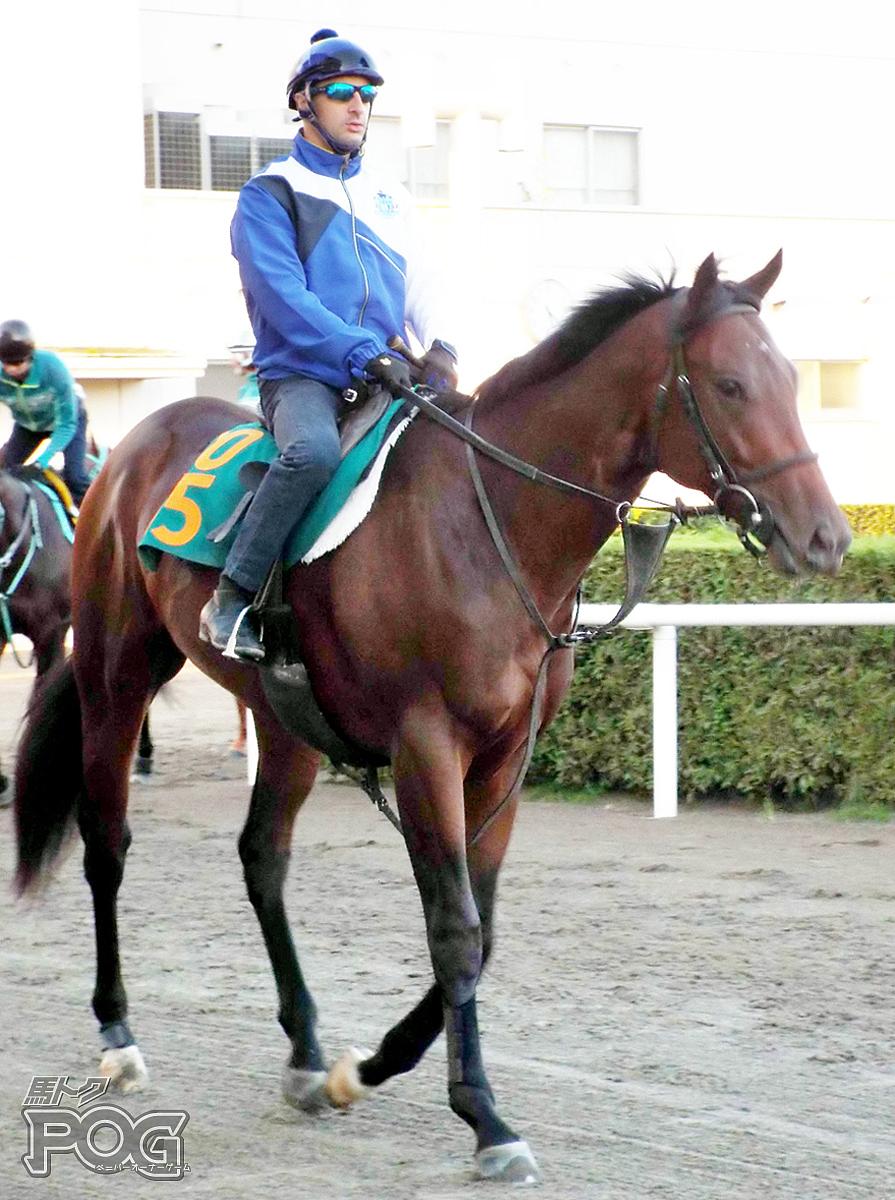 サトノテラスの馬体写真