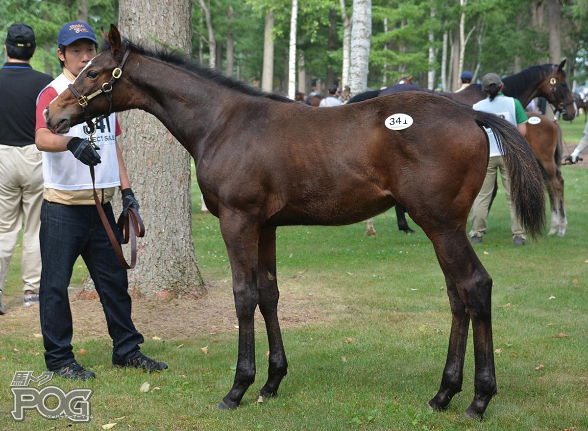 モルドレッドの馬体写真