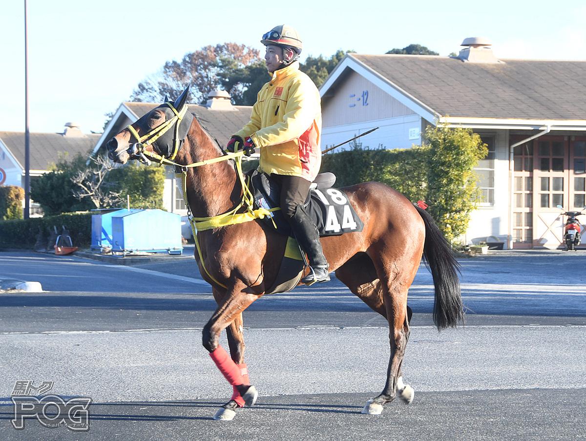 テイケイドルチェの馬体写真