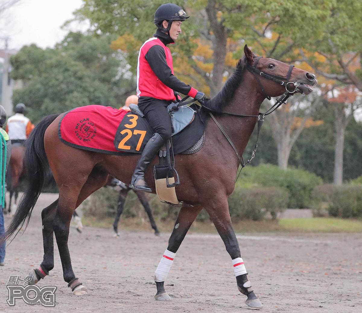 グランドピルエットの馬体写真