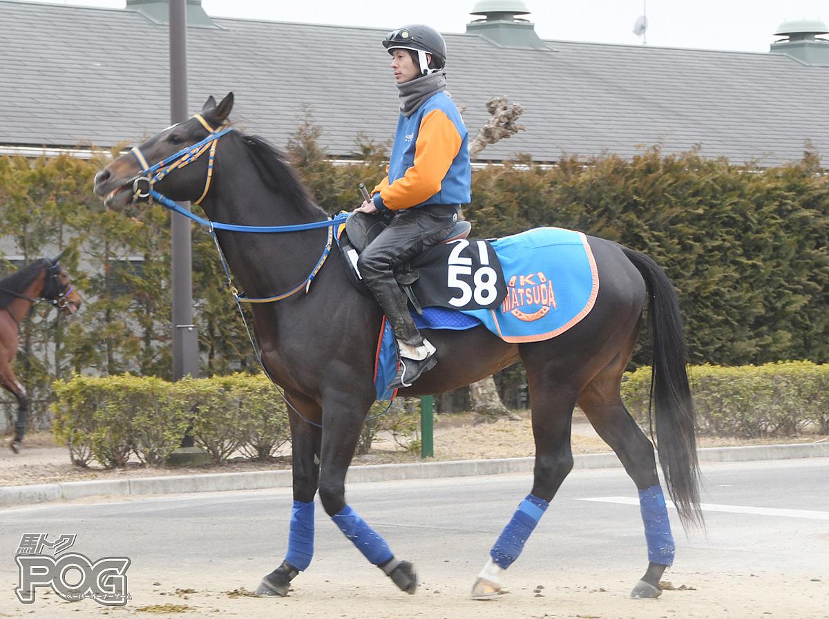 ディキディキの馬体写真