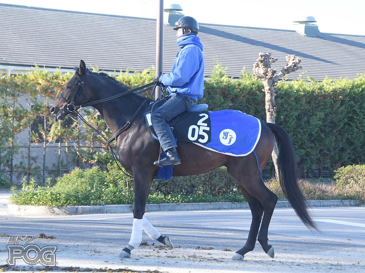 カザンの馬体写真