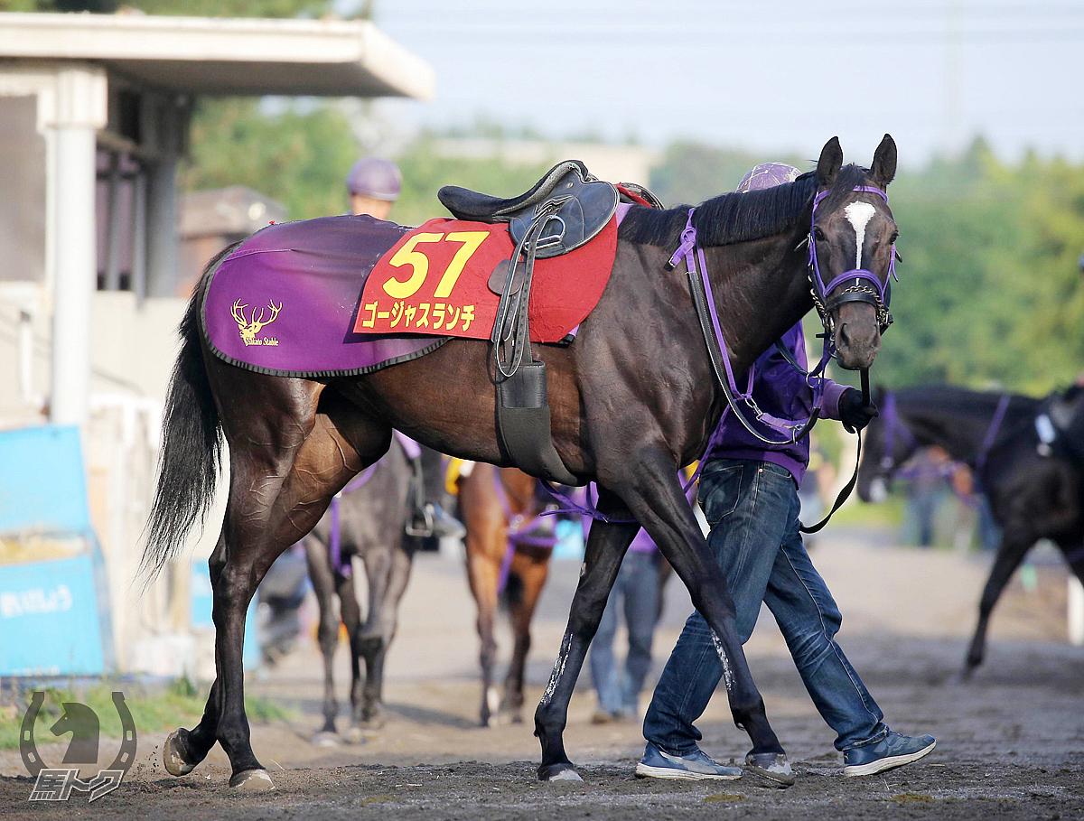 ゴージャスランチの馬体写真