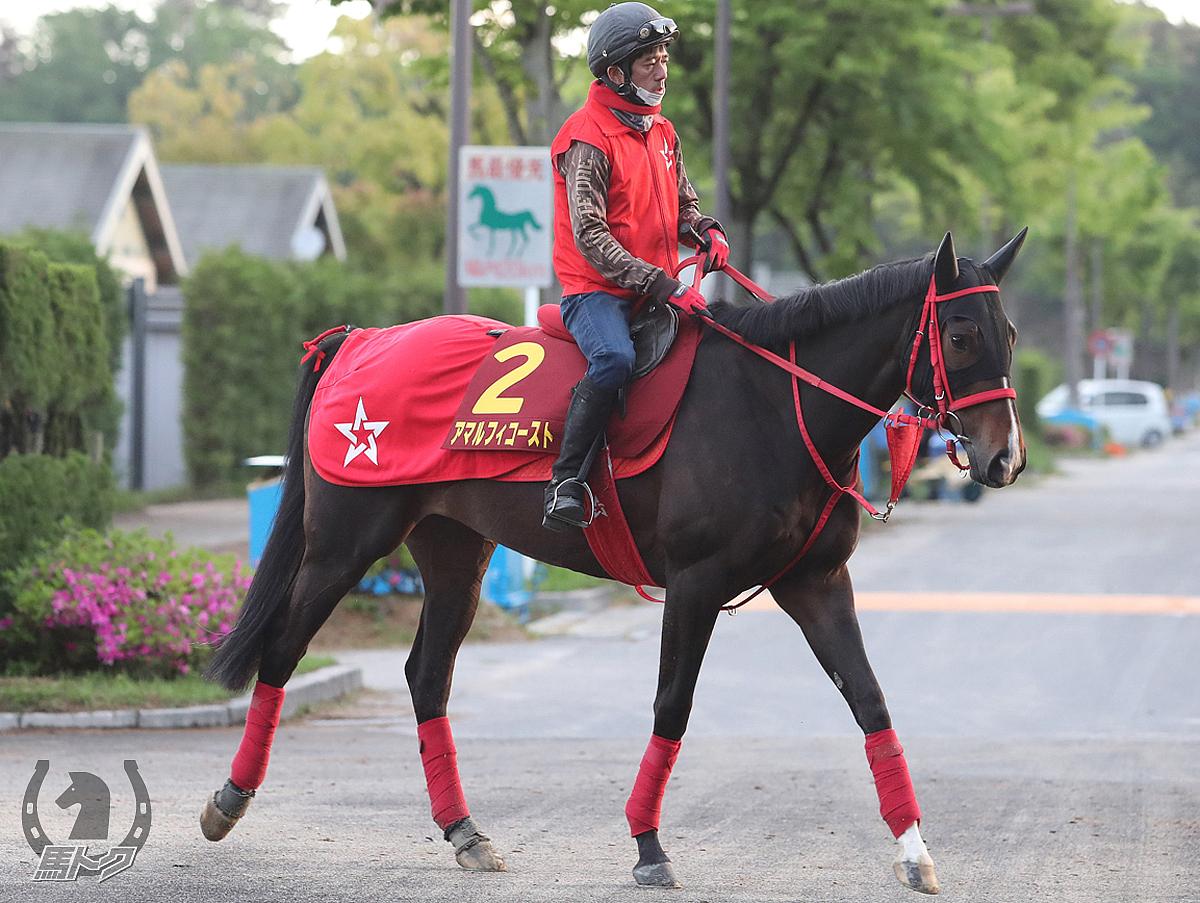 アマルフィコーストの馬体写真