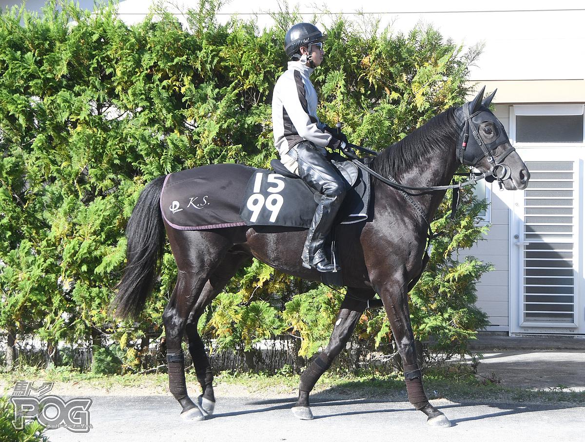 ガルソンの馬体写真