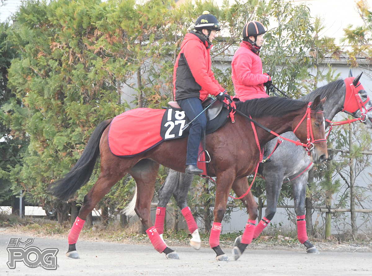 アップティルナウの馬体写真