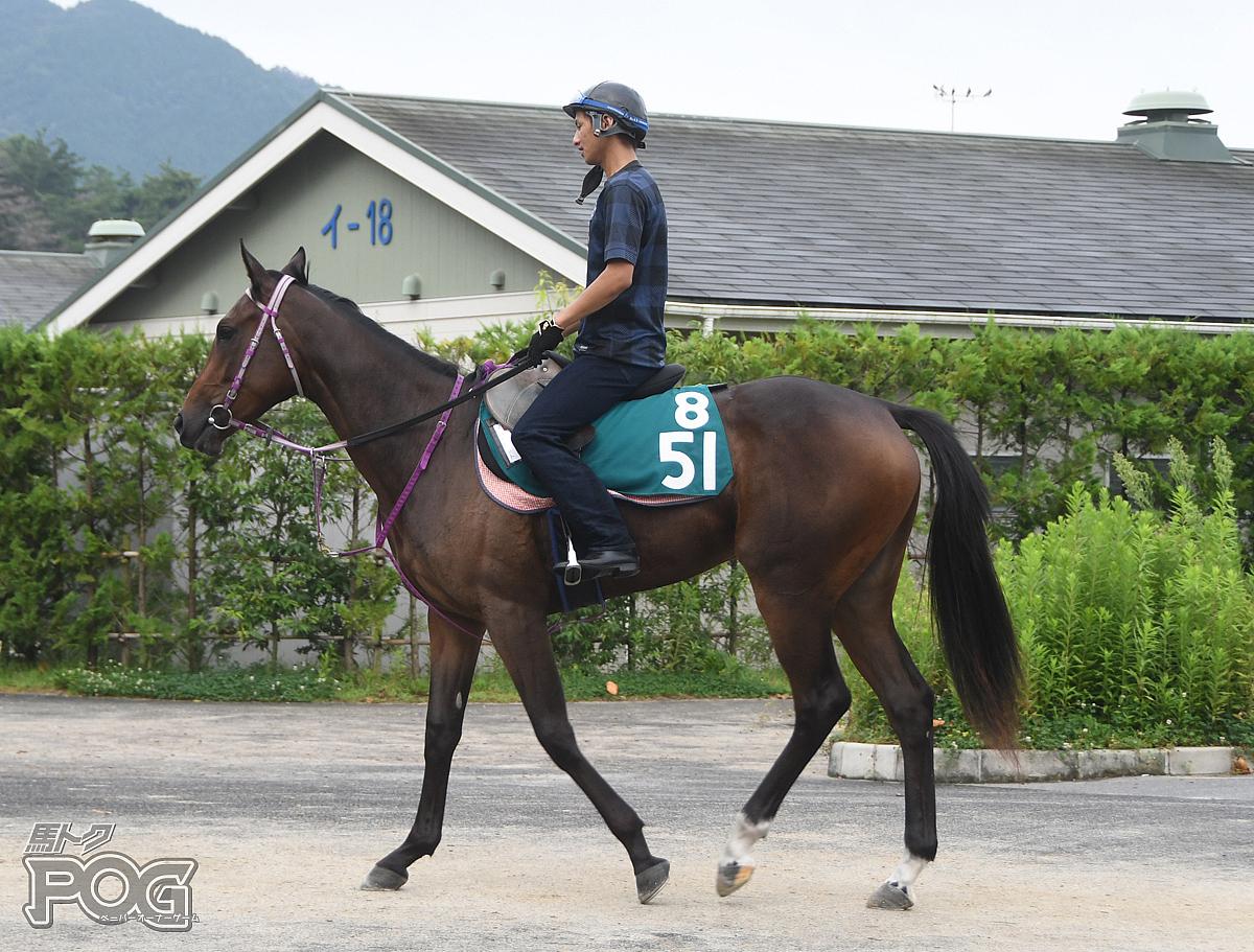 ピエナミントの馬体写真