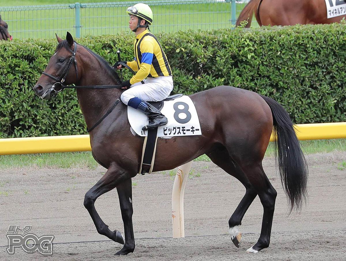 ビッグスモーキーの馬体写真