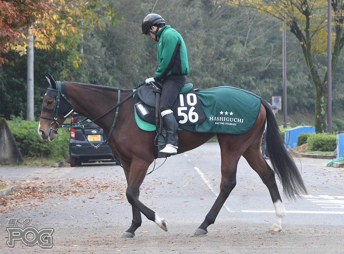 メジャーマジックの馬体写真