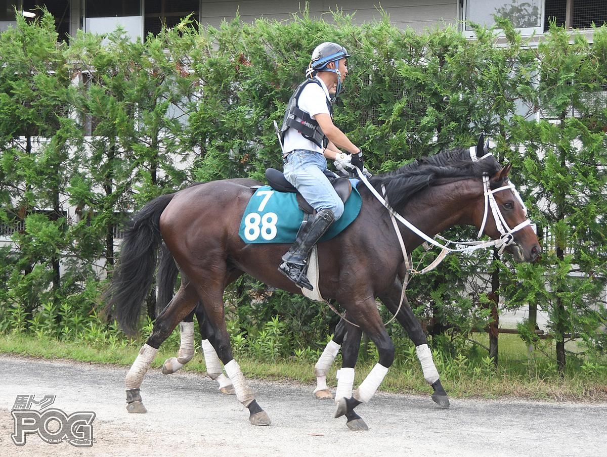 ミッキーガーデンの馬体写真