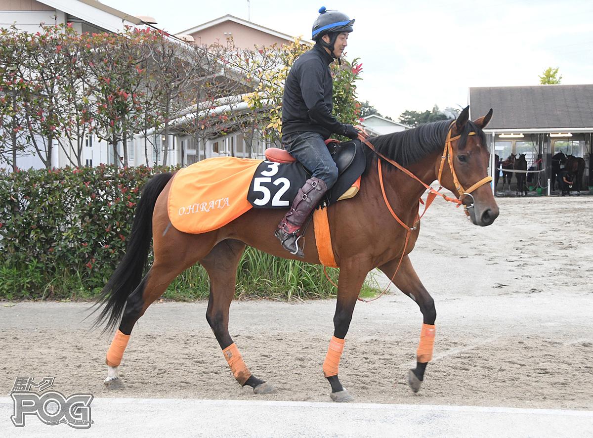 ゴルトキルシェの馬体写真