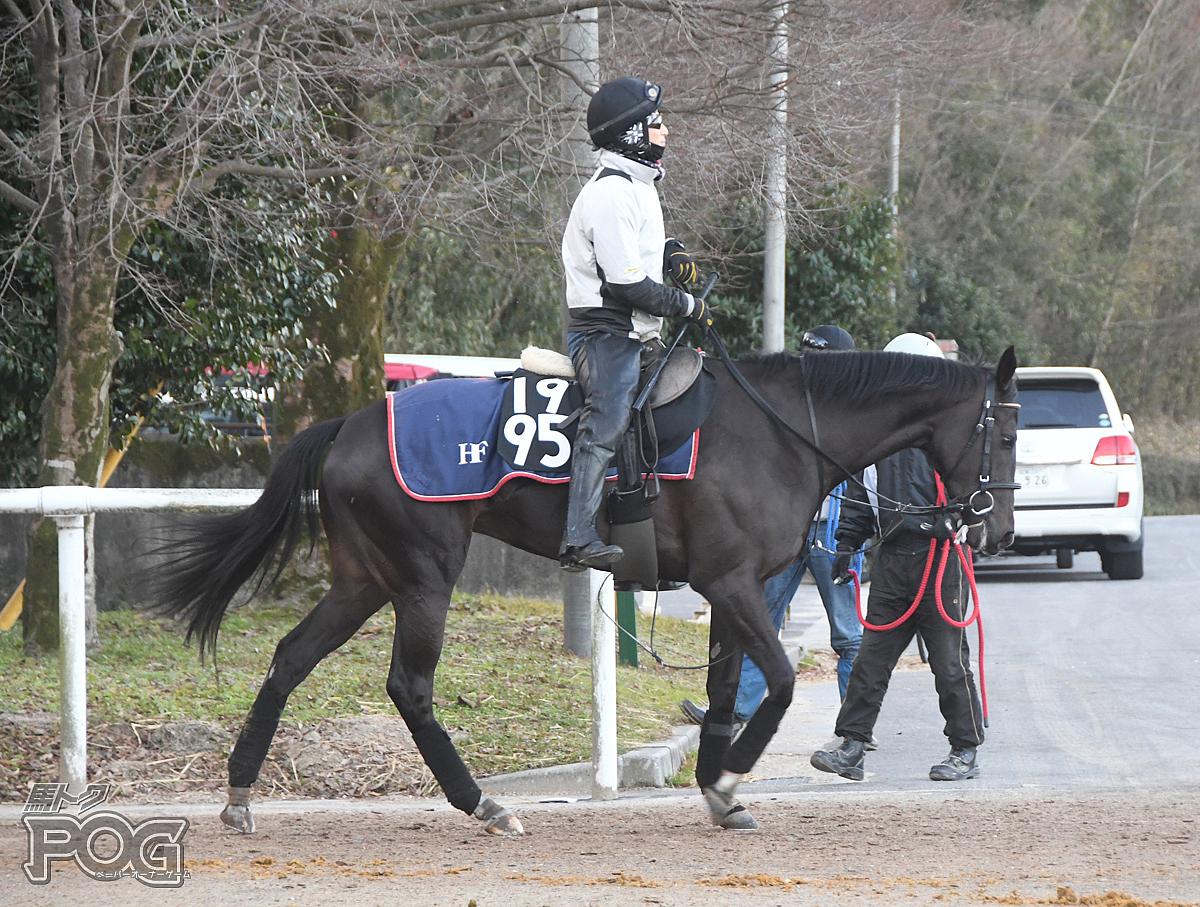 ダカーポの馬体写真