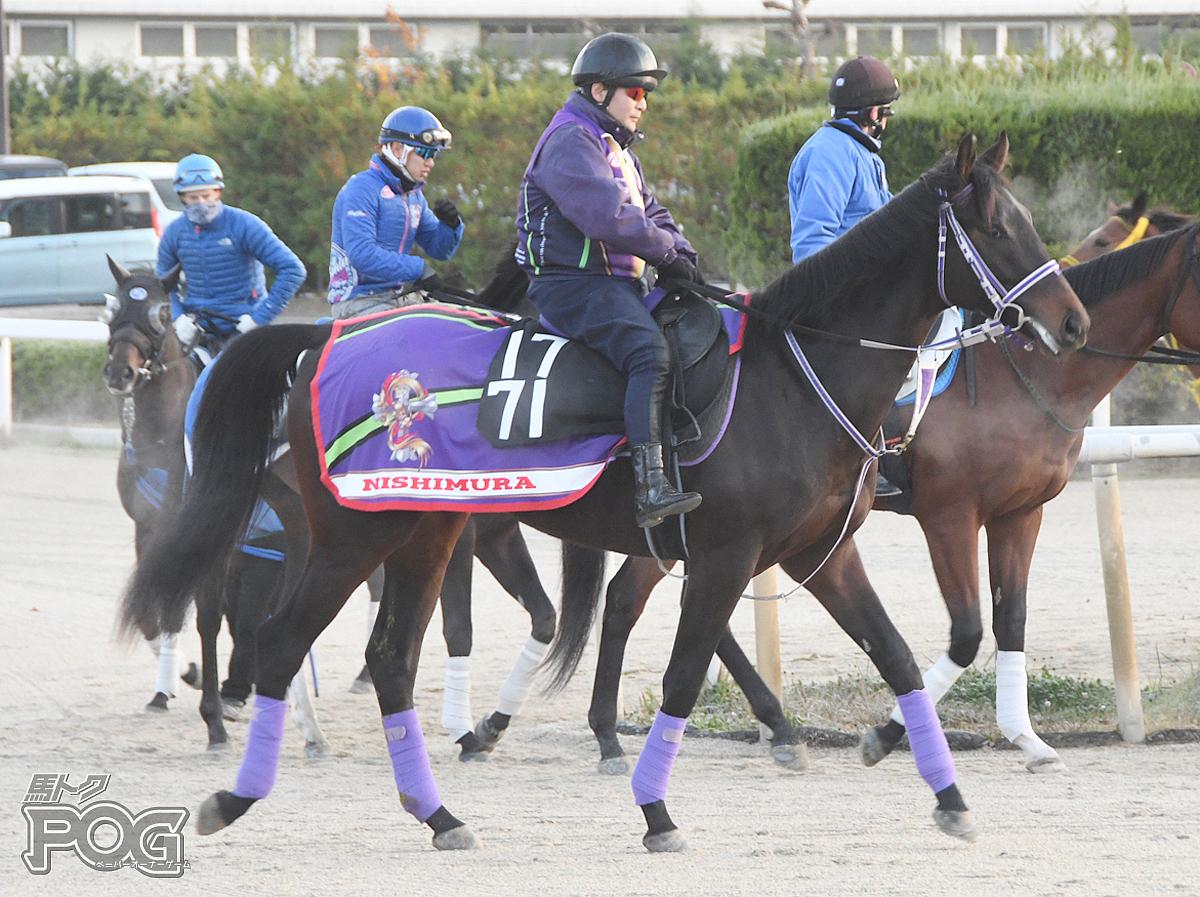 キングアンドアイの馬体写真