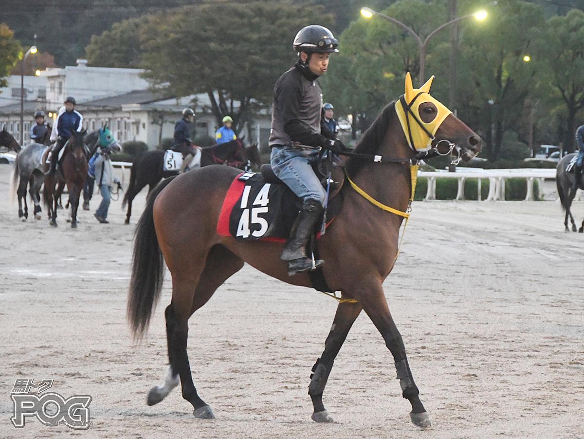 カッチャウカモネの馬体写真