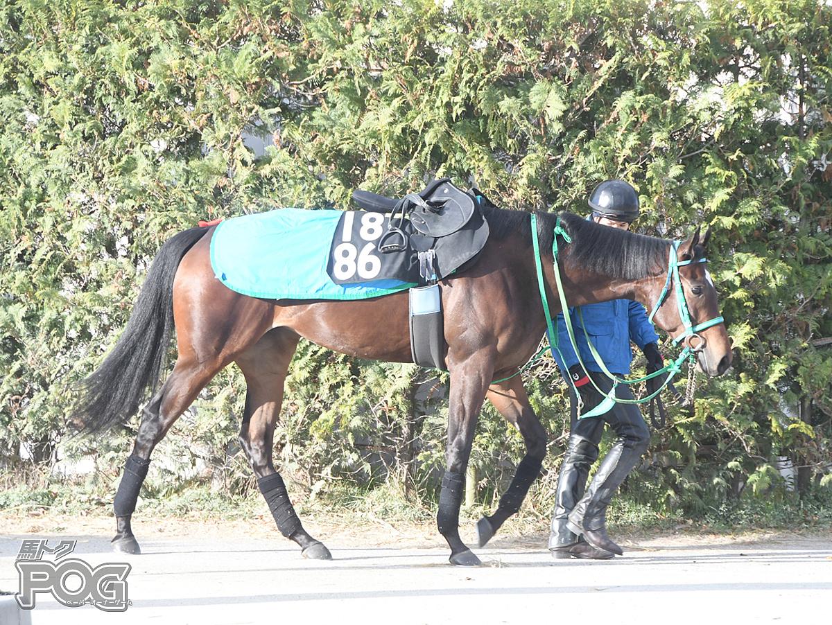 スカイブルーダイヤの馬体写真