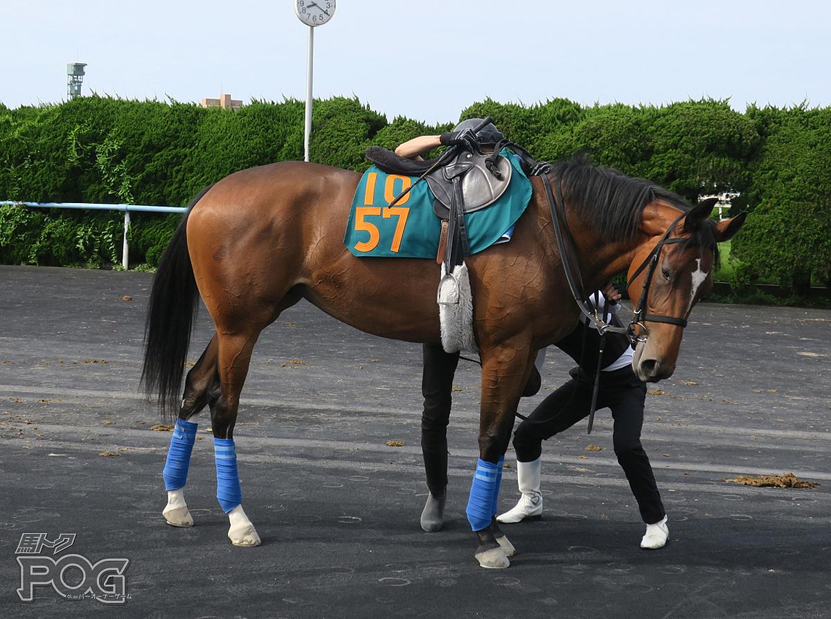 ラヴファンシフルの馬体写真