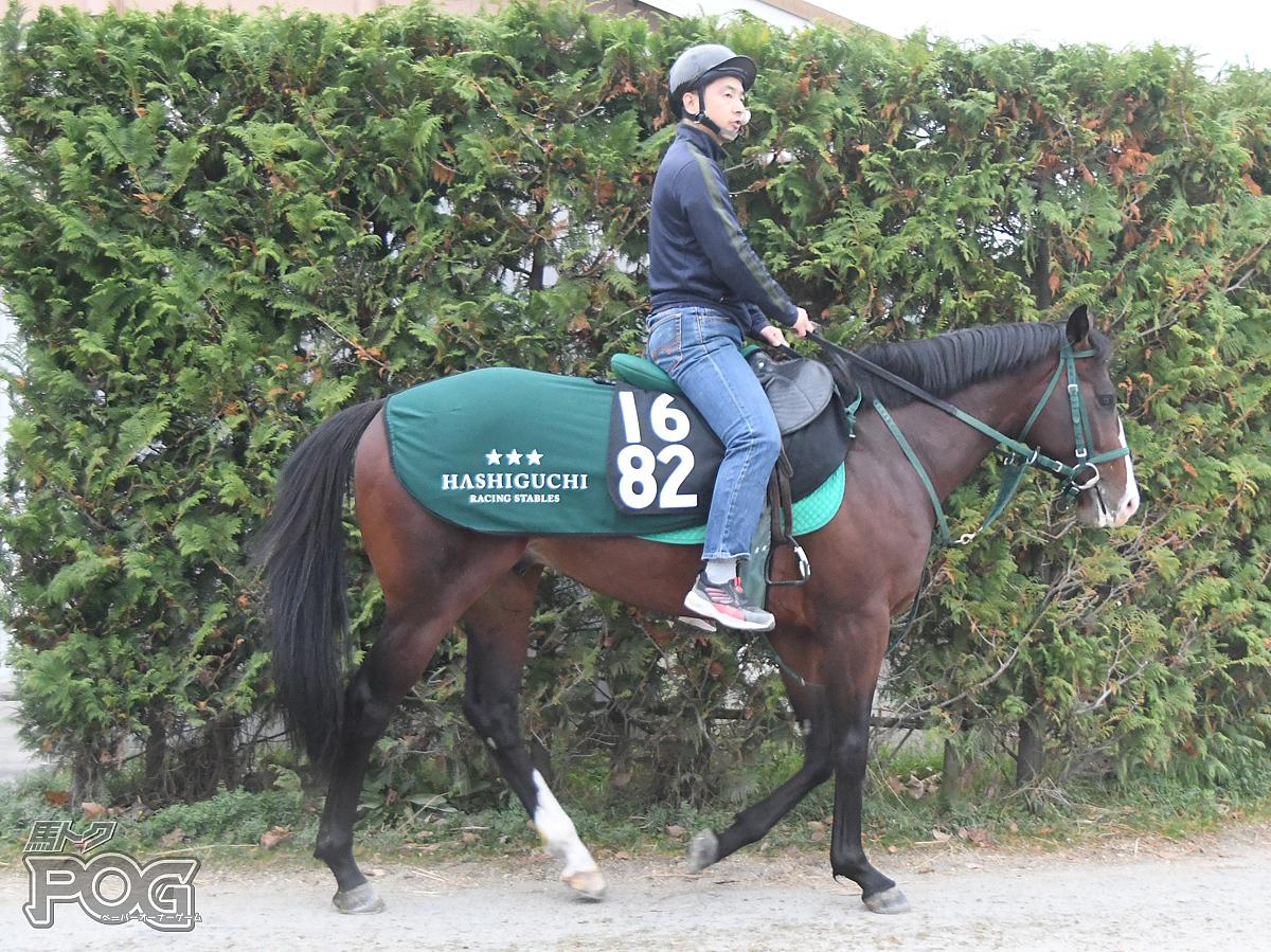 カレンヒップスターの馬体写真