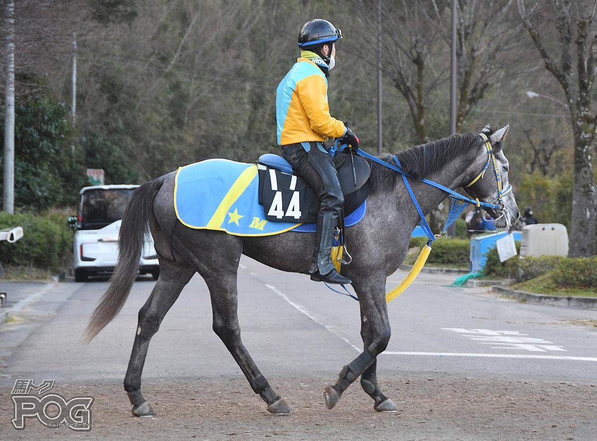 オースミバレルの馬体写真