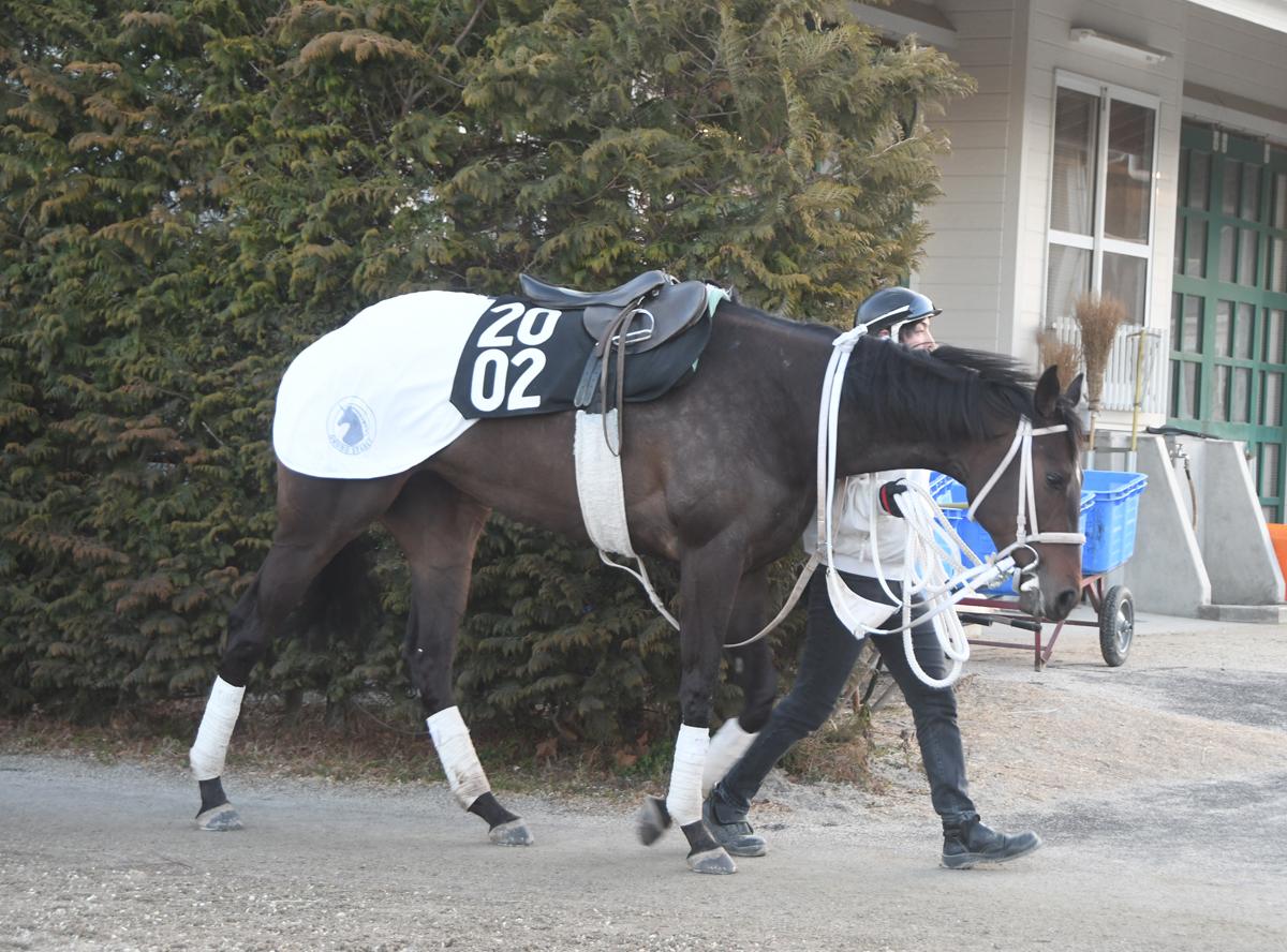 チュウワファーストの馬体写真