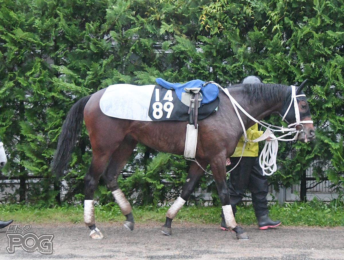 シーレーンの馬体写真