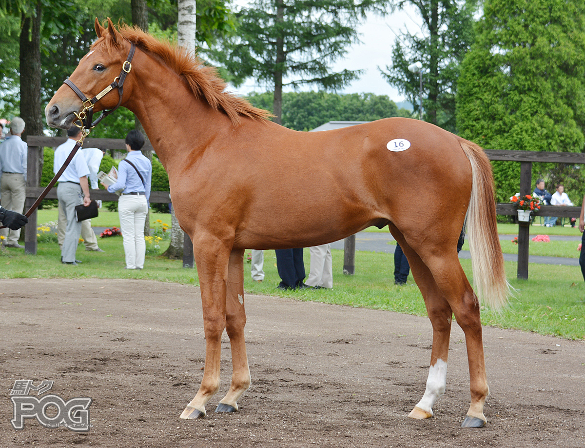 エナグリンの馬体写真