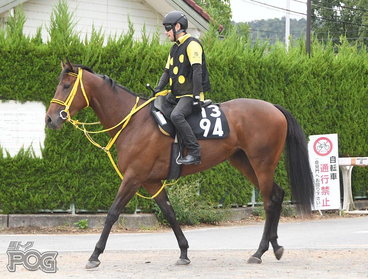 アルマーズの馬体写真