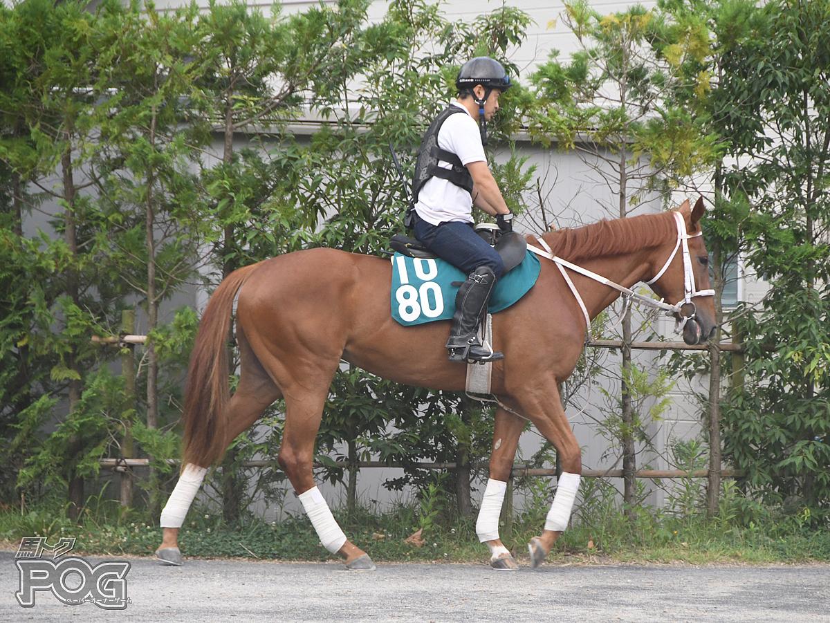 レッドゼノビアの馬体写真