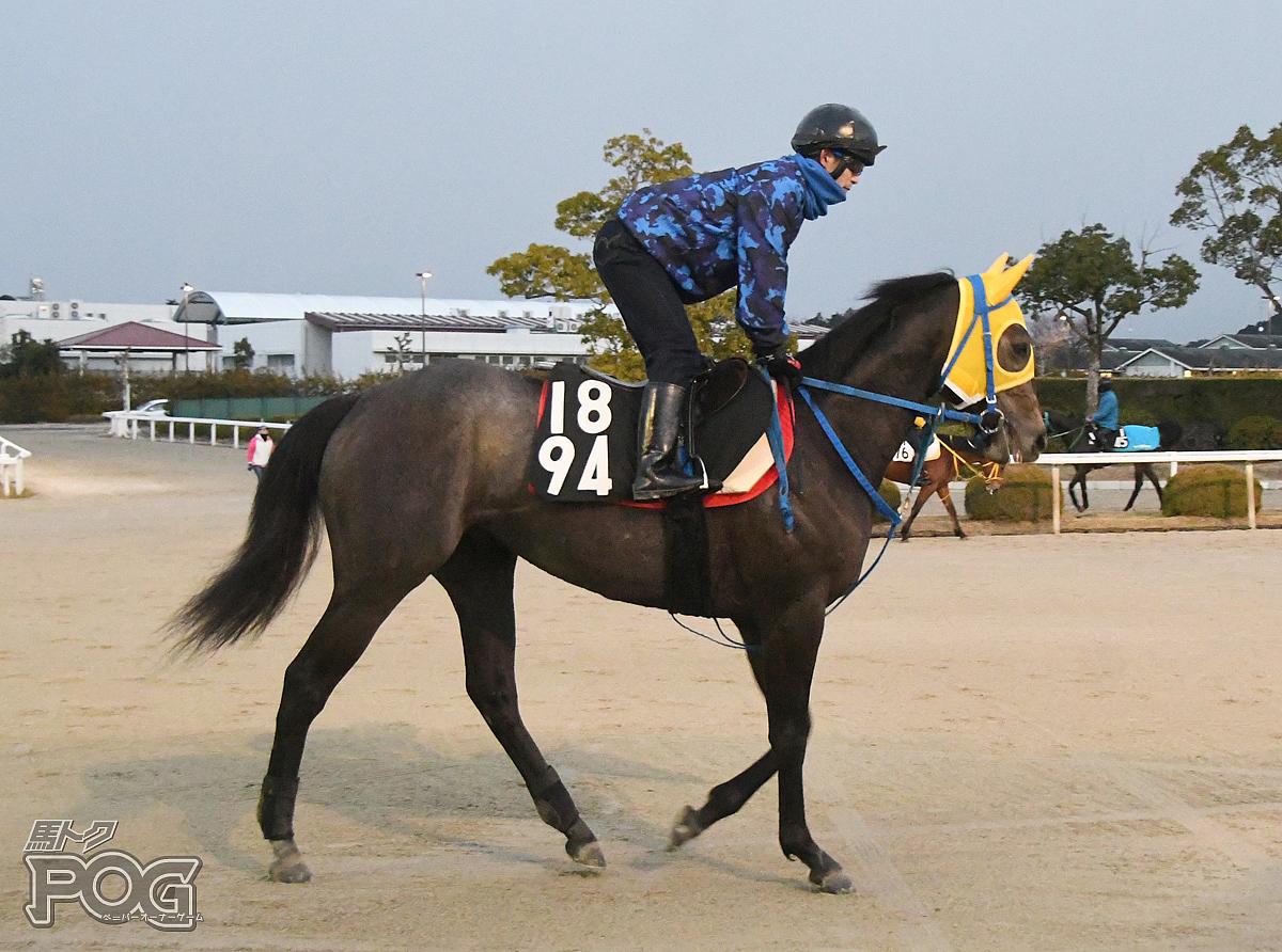 キンショーヘニーの馬体写真