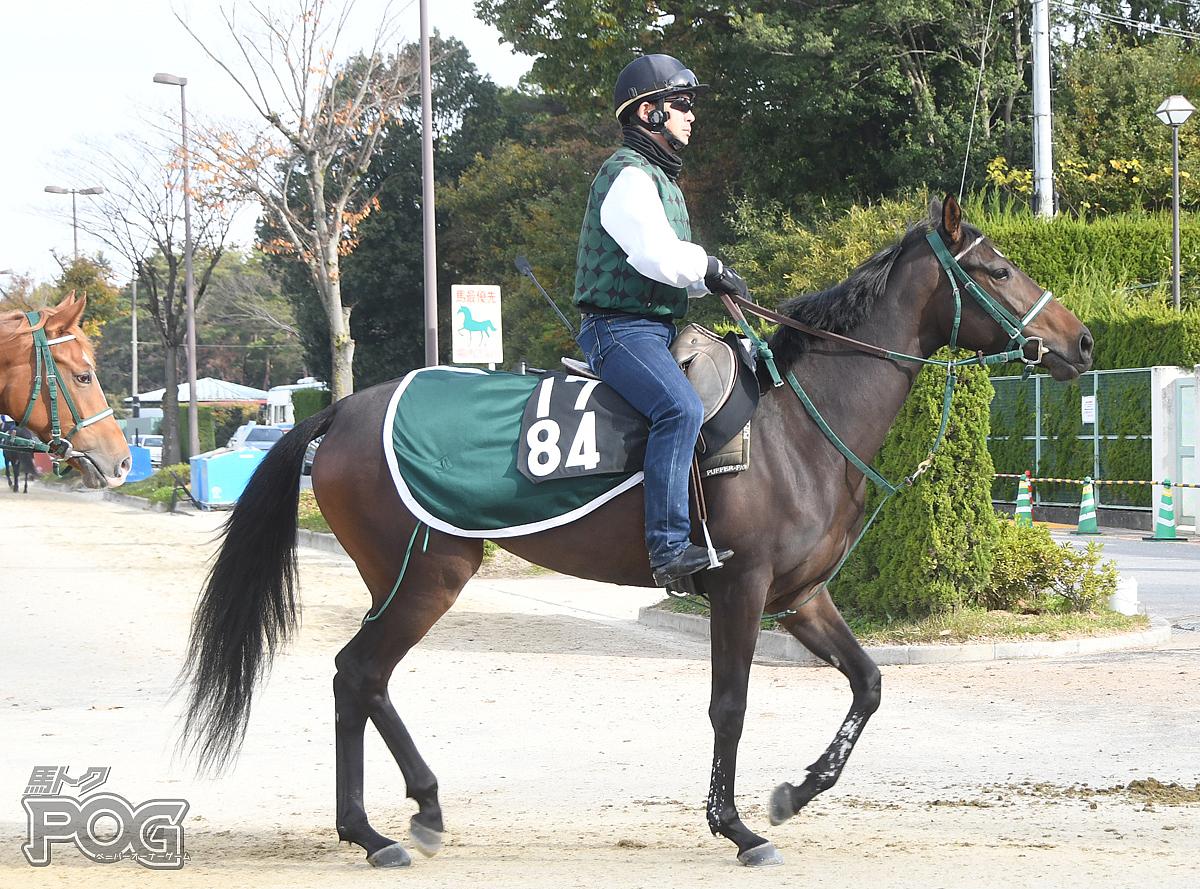 ピエナショコラの馬体写真