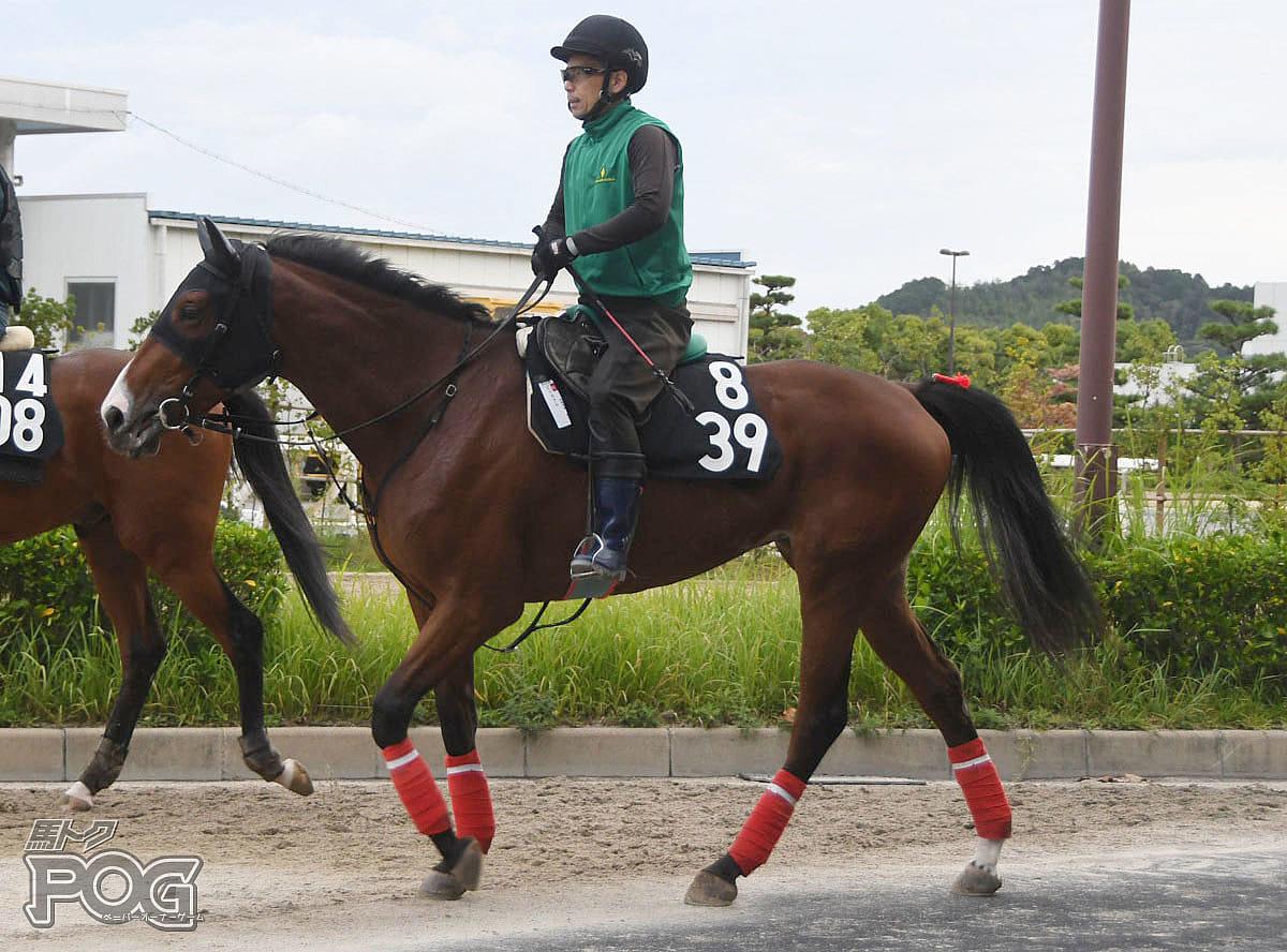 ピリカクルの馬体写真