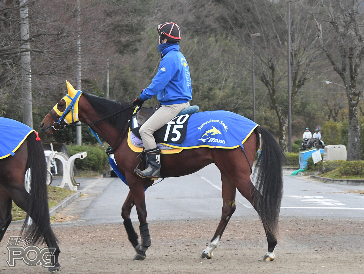 ナリノレッドスターの馬体写真