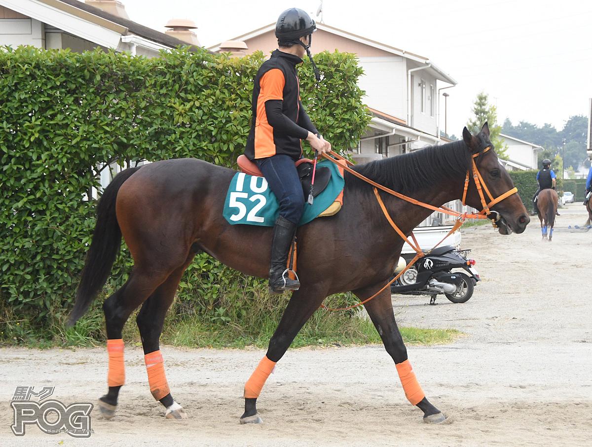 カレンエクスカリバの馬体写真
