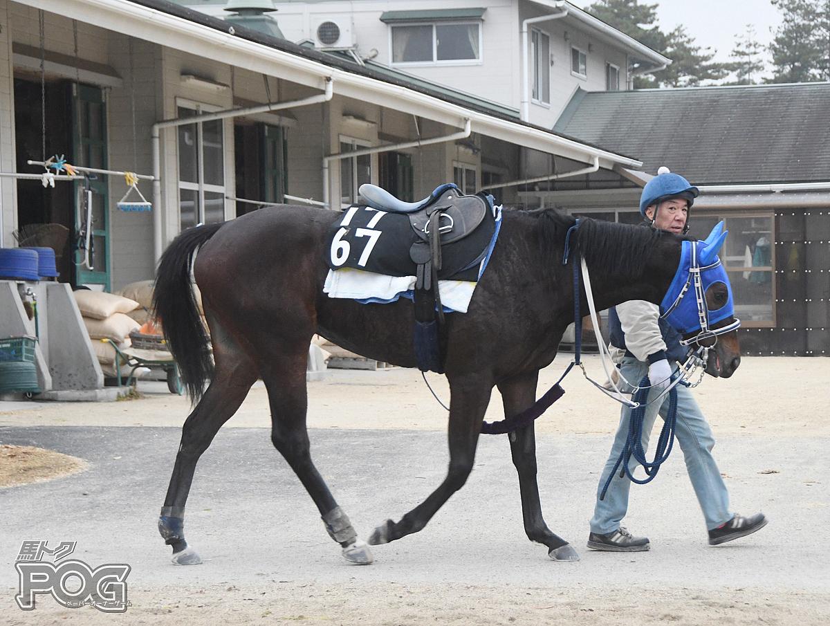 ウォーターレラの馬体写真