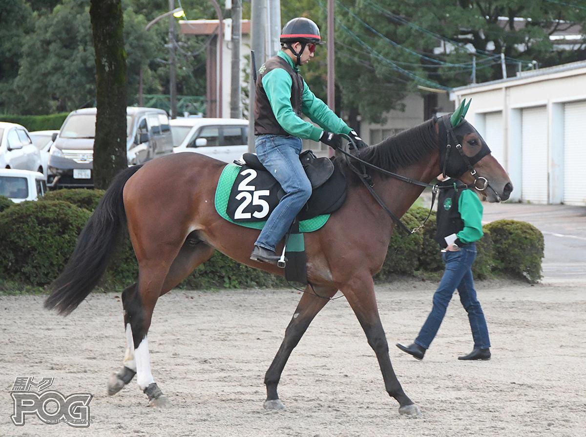 カフジフロンティアの馬体写真