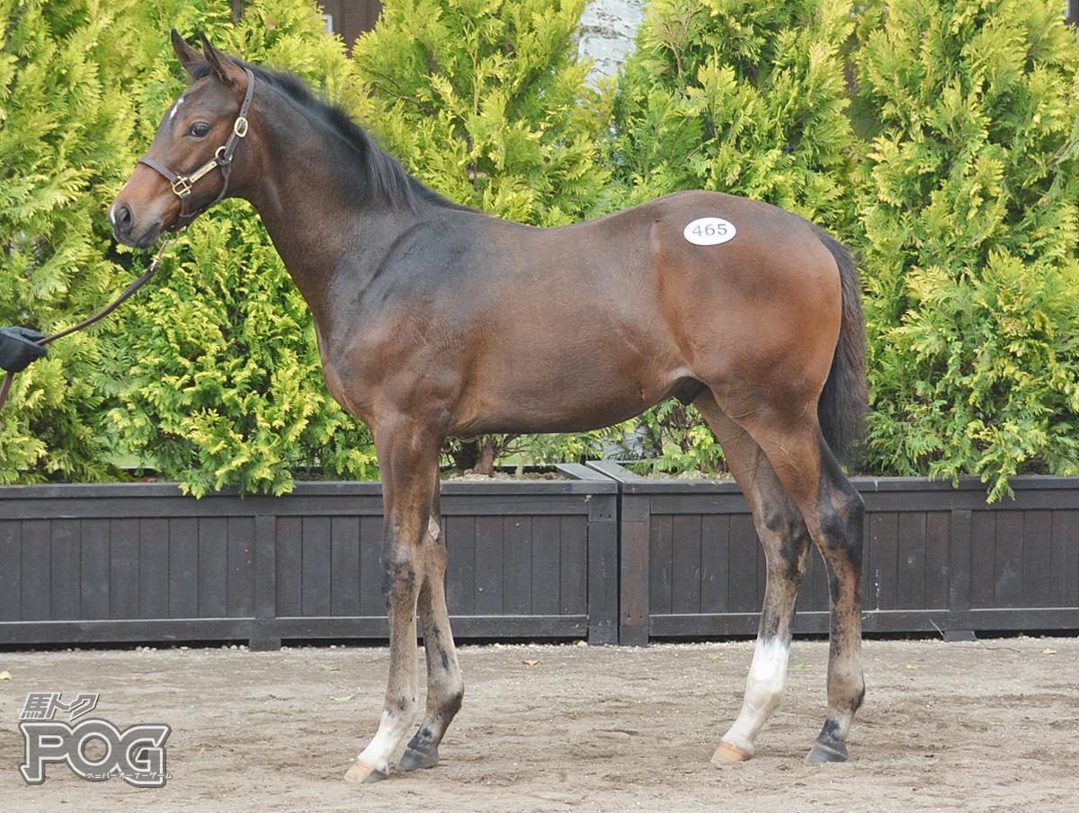 アサクサギルトの馬体写真