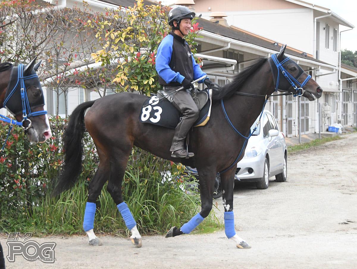ブリーズドゥースの馬体写真