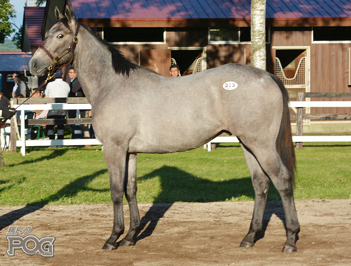 グリュックの馬体写真