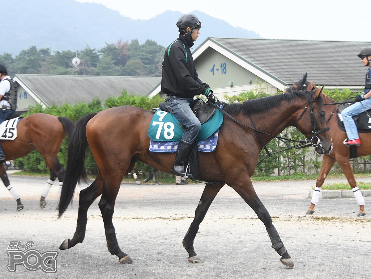 スワーヴアラミスの馬体写真