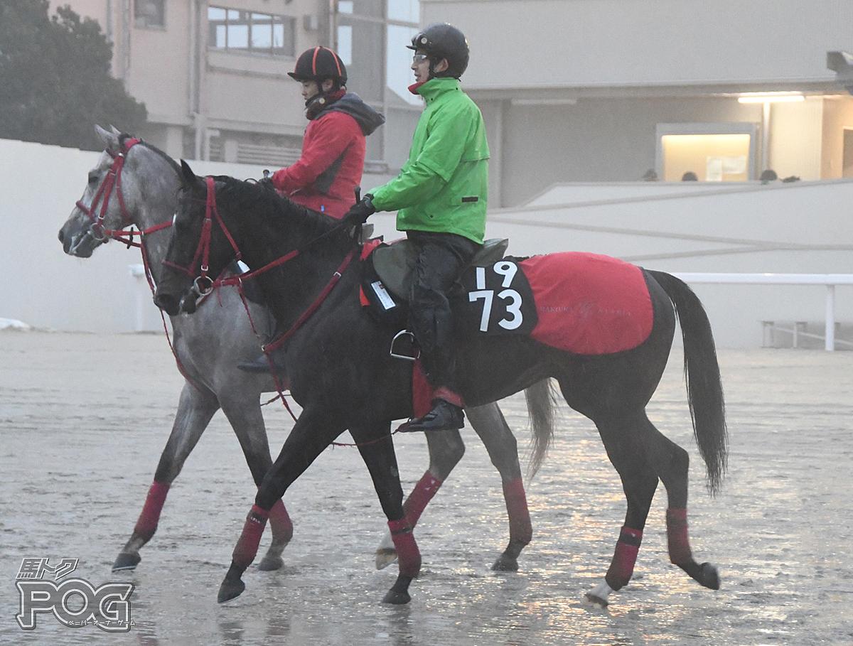ボーンスキルフルの馬体写真