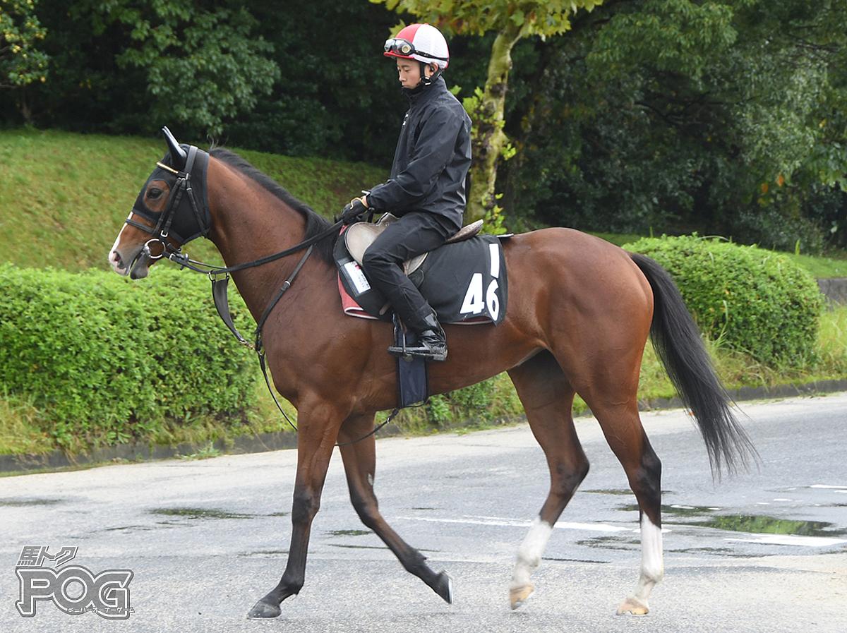 エイカイマドンナの馬体写真