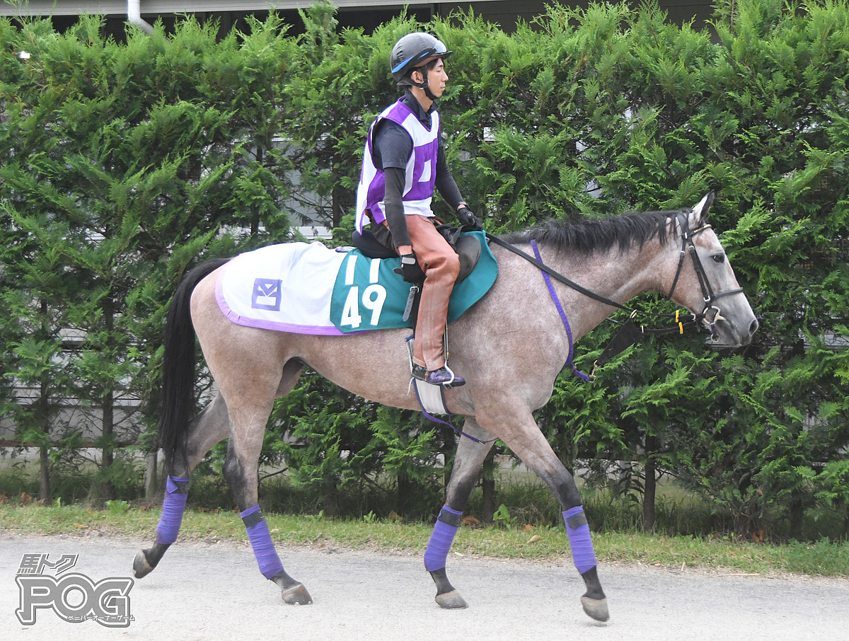 エトワールドパリの馬体写真