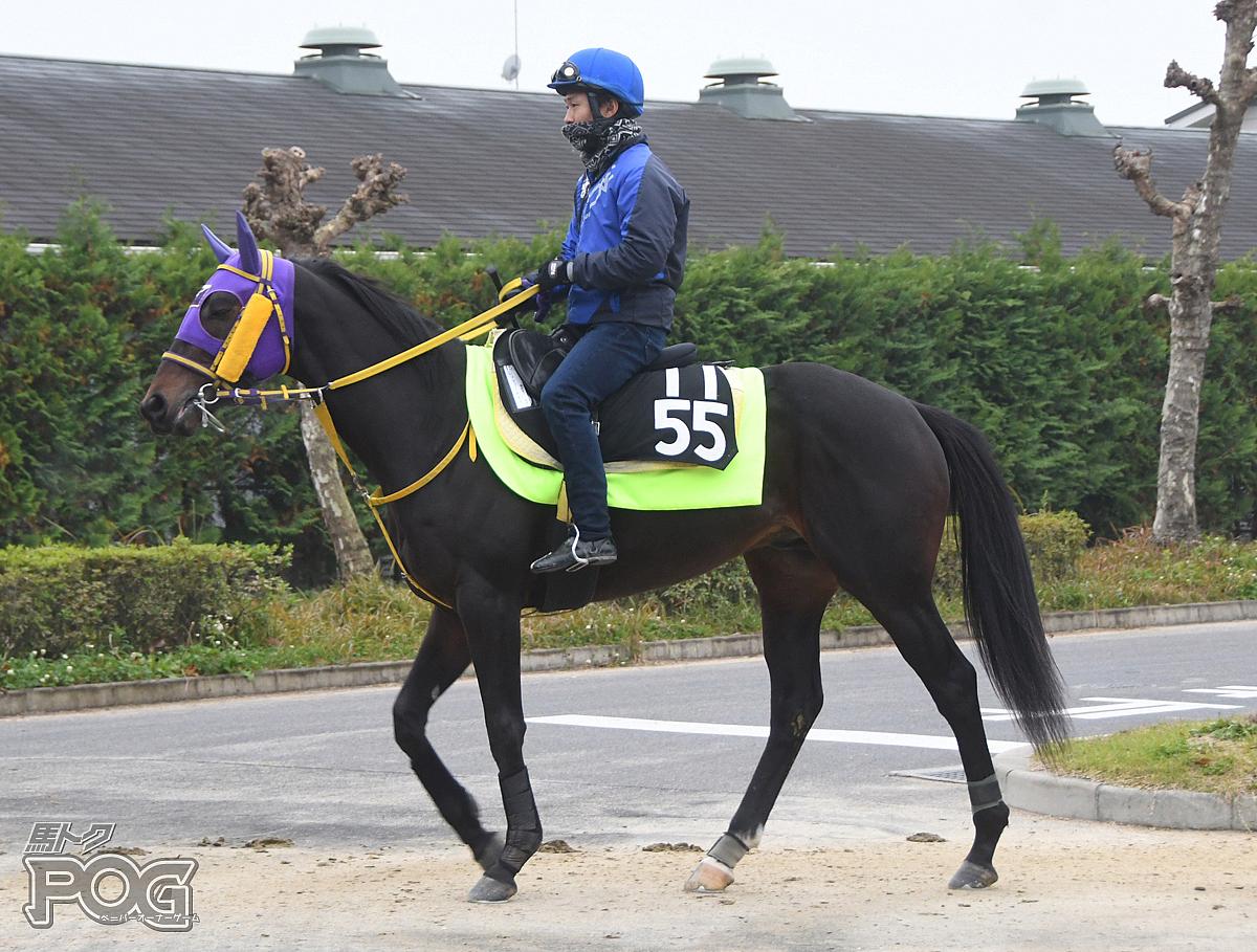 レッツゴーキティの馬体写真