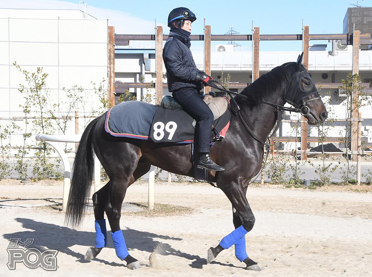 アンドレアスの馬体写真